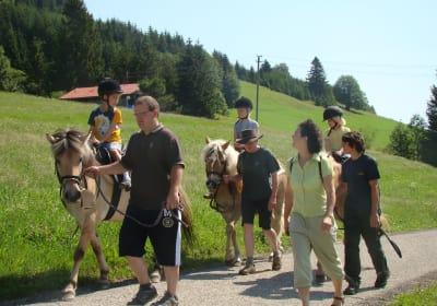 Pferdetrekking Sommer