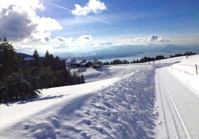 Innauer Hof: Der Bio-Hof mit Panoramablick auf den Bodensee