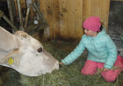 Annabelle is feeding the cows