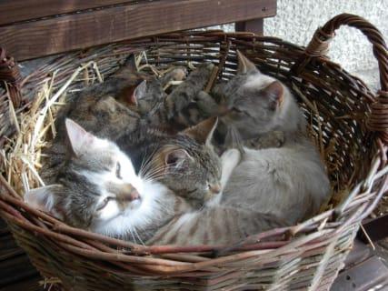 Breitenberg - Katzenkinder