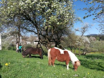 Mayerhof - Wendy und Sophie, unsere Ponies