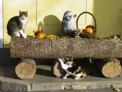 Wurzer - unsere Katzen (Bild: Familie Wurzer)