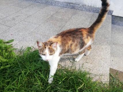 Grünbauer - Katze