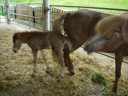 Our foal Dottla is born!!