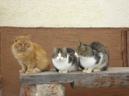 Our band of cats