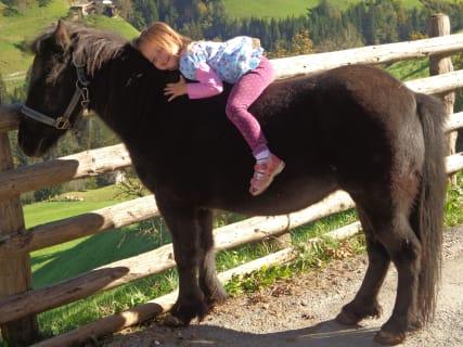 Pony Wendy