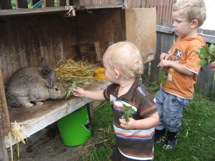 Bruno + Emil feeding the rabbits