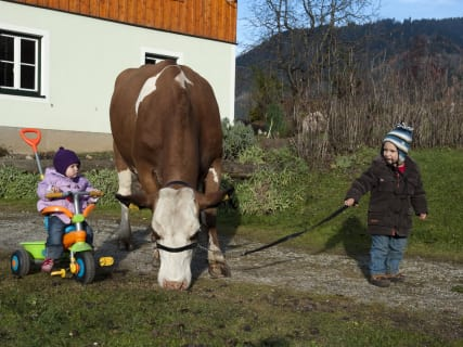 Gregor with his cow- Kufstein
