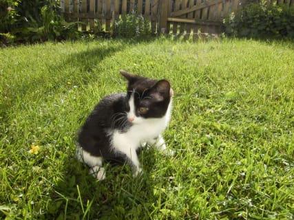 Katzenbabies4