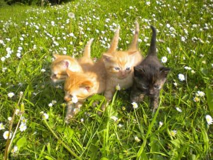 3 Garfields und 1 Schwesterchen