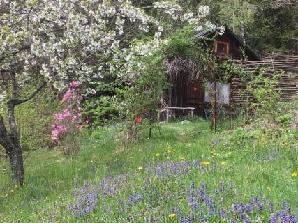 Frühlingsblüten um die Kräutlhütte