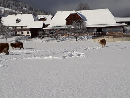 Der Zirkerhof im Winter