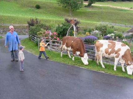 Altbauer Peter mit Gästekindern beim Kühetreiben