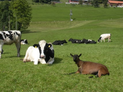 Our animals are in pasture every day in summer