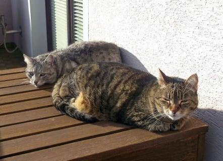 Gästehaus Schlossblick - unsere beiden Katzen