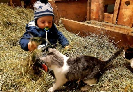Kinderfreude am Bauernhof mit Katze Mitzi