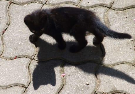 Ein Schatten schleicht durch den Tag