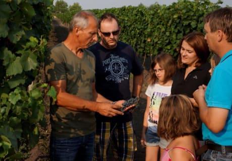 Weingartenführung