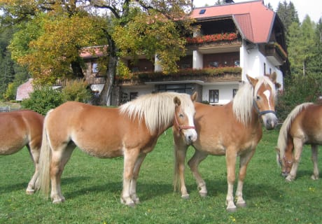 Pferde vorm Haus