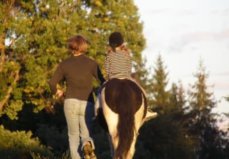 Aktivität Pony 2