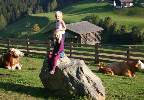 Kühe und Kinder mögen sich