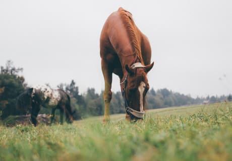 """Pferd """"Sisko"""" und """"Lisa"""" beim Weiden"""