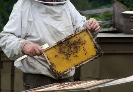 fleißig wie die Bienen2