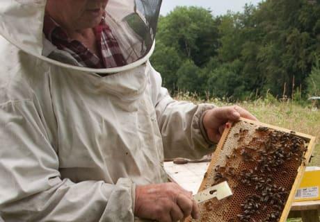 fleißig wie die Bienen4