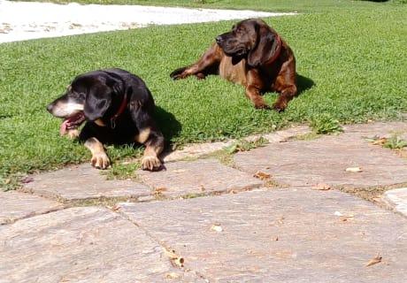 Unsere Hunde Stella & Dinah