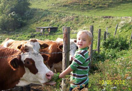 Urlaub  unsere Kühe
