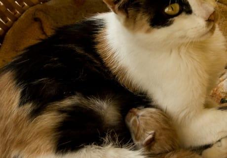 Katzenmama mit Baby