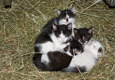 5 junge Kätzchen
