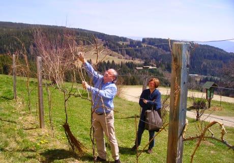 "Weinbauversuch (""Veneto"")"