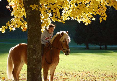 Frabenzauber im Herbst - Ausrreiten mit unseren Haflingerpferden