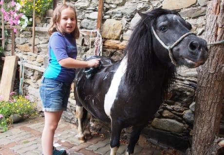 Pony waschen