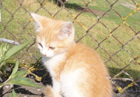 eines der Kätzchen