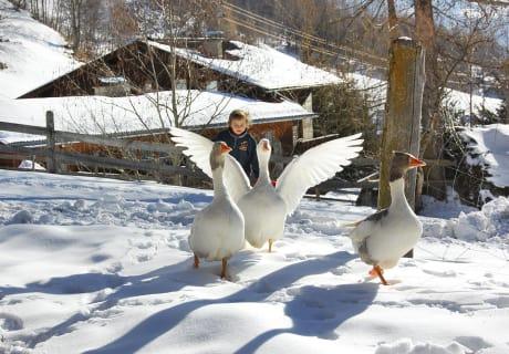 Die Gänse auf Winterausflug