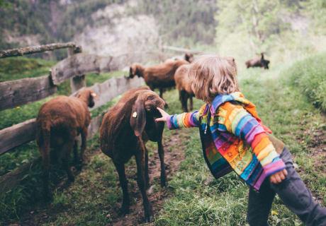 Amelie und die Schafe
