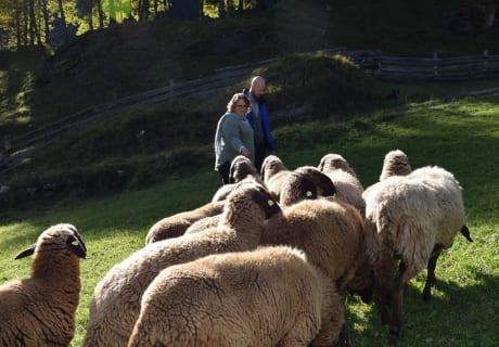 Bei den Schafen