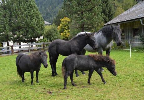 Unsere 4 Pferde im Herbst 2017