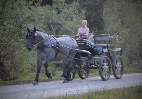 Kutschenfahrt mit Farina