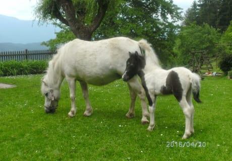 Pony Lilli und Fohlen Finn