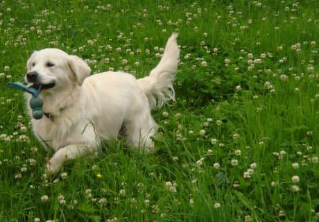 Merlin unser Hund