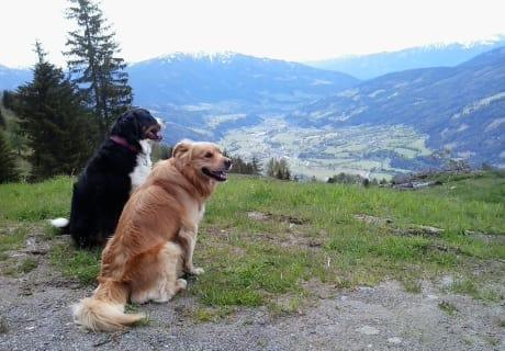 Auch den Hunden gefällt es hier bei uns !