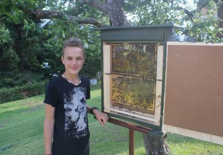 Unser Bienenvolk