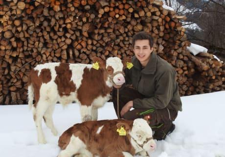 Unsere Kälber fühlen sich auch im Schnee wohl