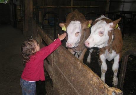Tierberührungen