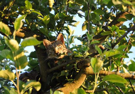 Katze Momo am Baum unterwegs