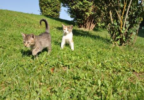Steichelkatzen unterwegs