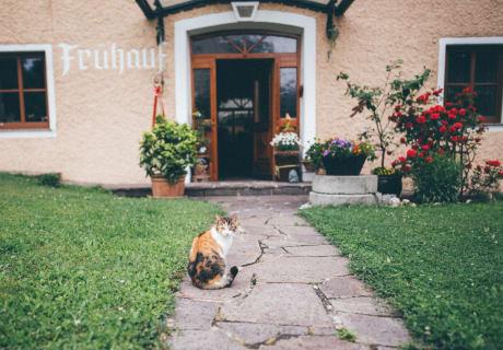 Katzenansicht am Hof